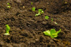 Mutterboden, Schüttgut